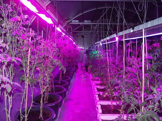 Led светильник для растений своими руками